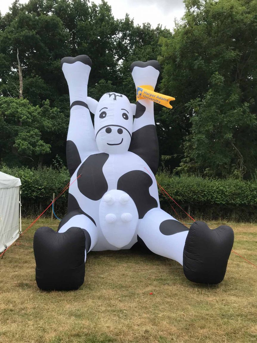 Large inflatable black and white cow with udder
